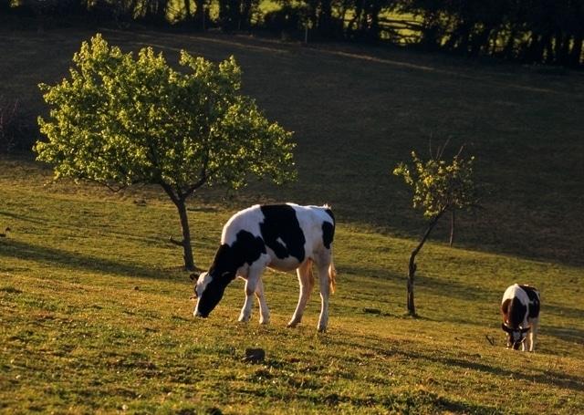Las entregas de leche de vaca se moderan y suben solo un 0,4% y en 53.000 t en marzo en la UE