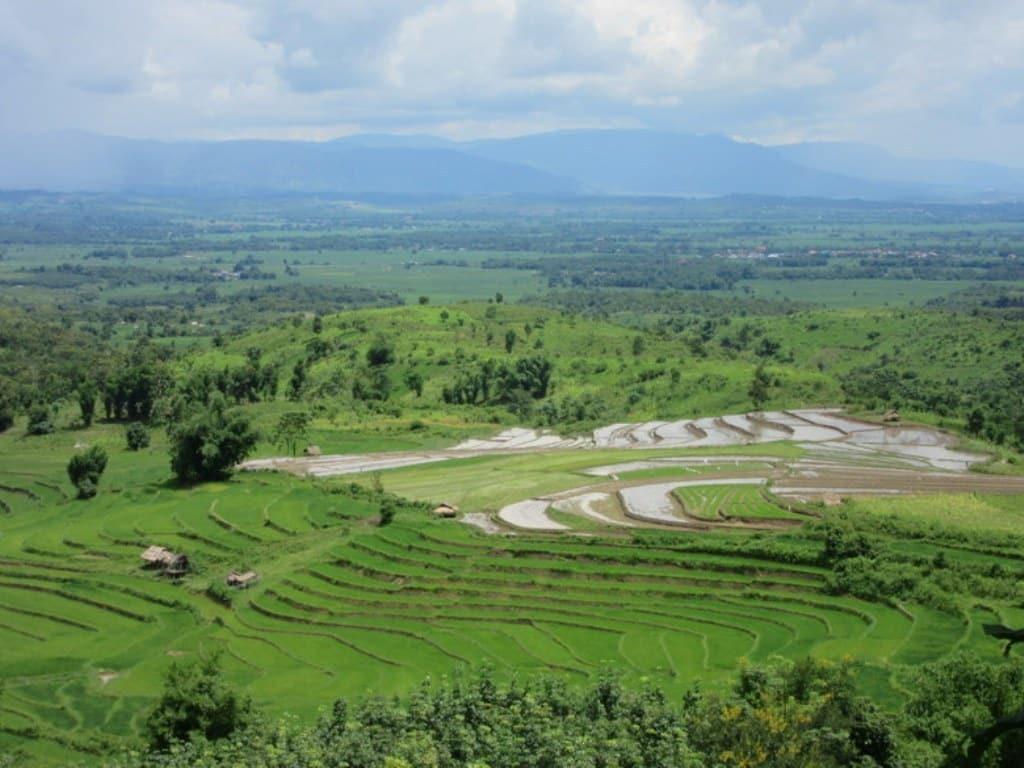 Bruselas inicia una larga investigación sobre importaciones al mercado UE de arroz de Camboya y Birmania