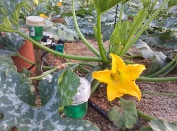 Estrategias para mejorar la eficiencia del fertirriego en horticultura intensiva