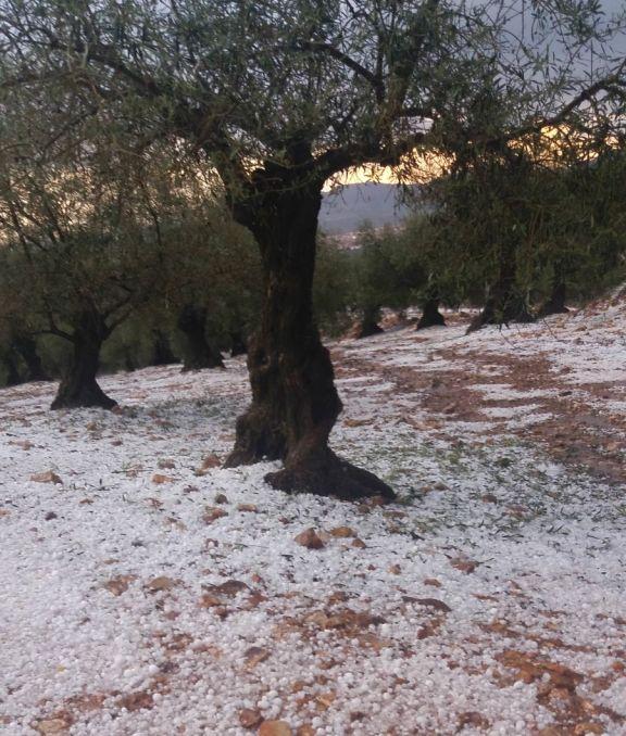 Granizo y heladas afectaron a diversos cultivos en Castilla-La Mancha y Extremadura
