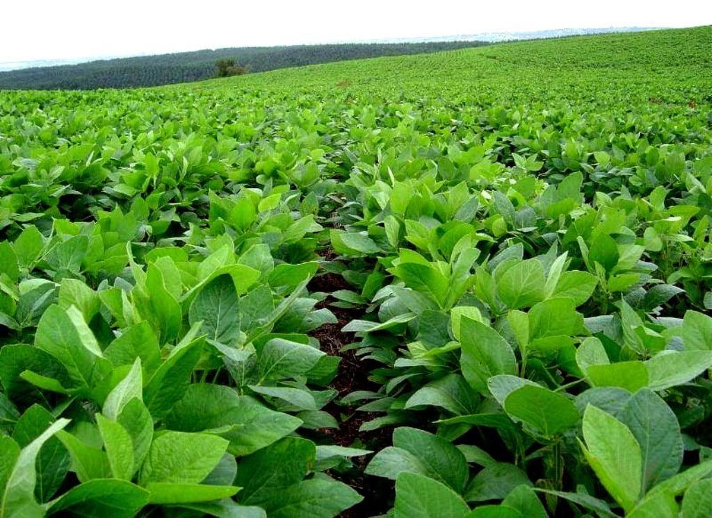Nuevo récord en la superficie mundial destinada a cultivos modificados mediante biotecnología