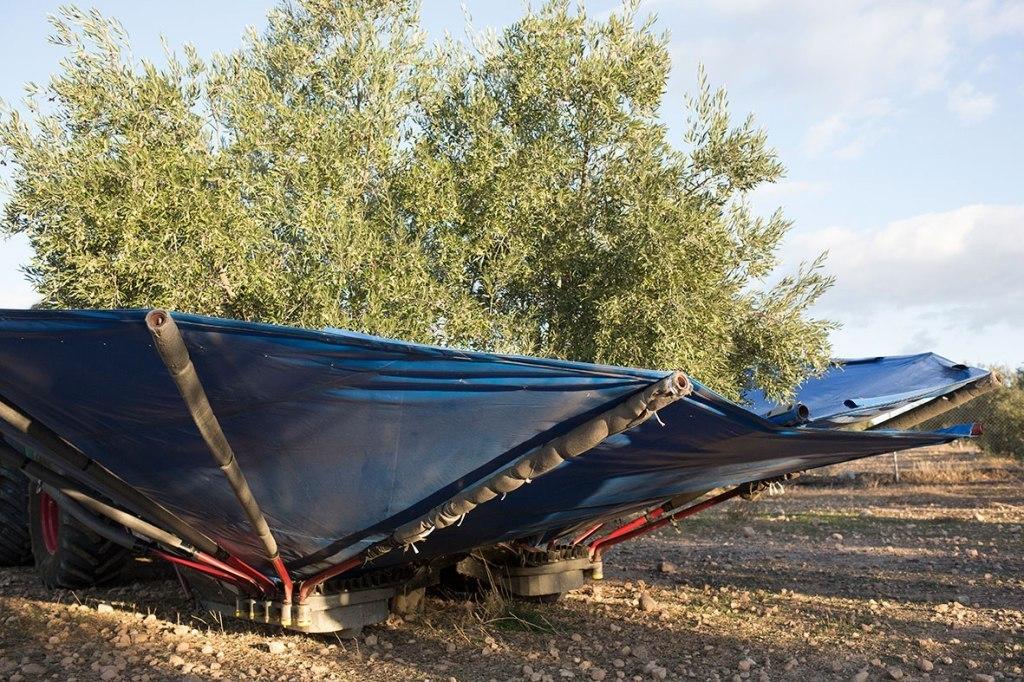 Las salidas de aceite de oliva al mercado suman ya 859.000 t hasta finales de mayo