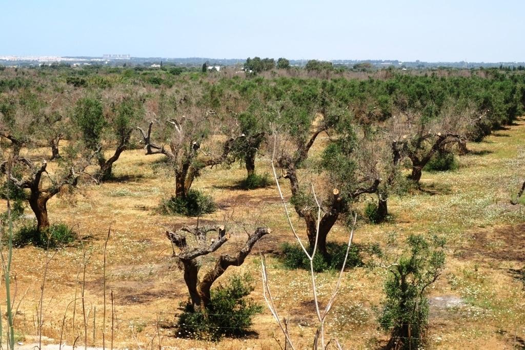 Sanidad vegetal y la ineficiencia de los controles fitosanitarios en frontera. Por Jaime Lamo de Espinosa