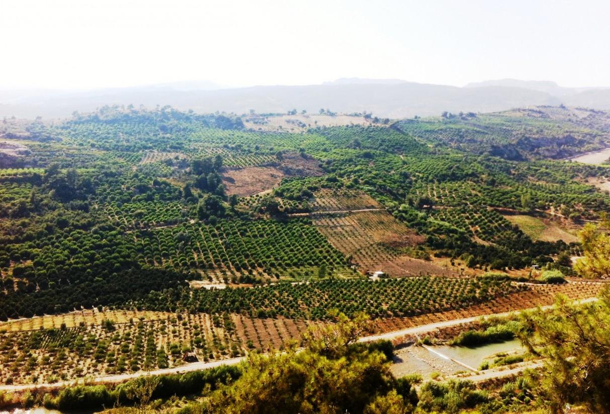 La UE mantiene a los limones turcos en la lista de riesgo por residuos