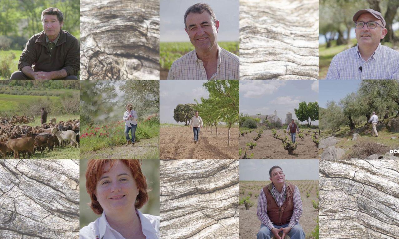 El grupo cooperativo Dcoop desmiente de forma tajante haber sido sancionado por importar aceite de oliva