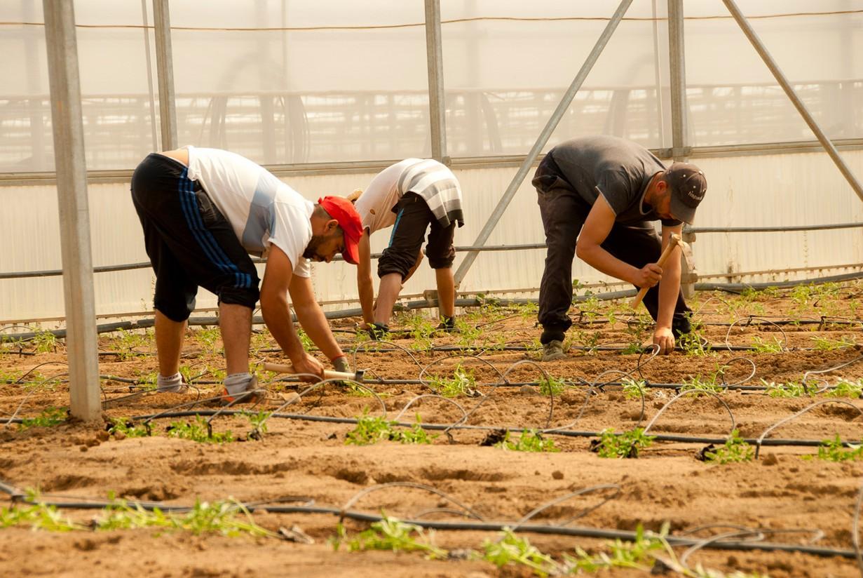 UPA pide al Gobierno un plan de apoyo a la formación de las personas inmigrantes