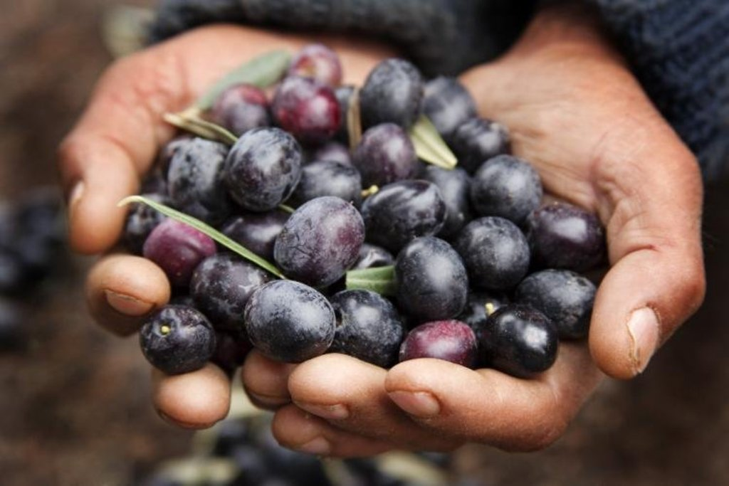 EE.UU, pese a la tregua comercial con la UE, confirma los aranceles a la  aceituna negra