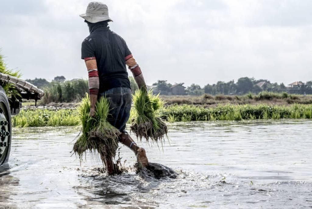 El índice FAO de precios mundiales de los alimentos básicos bajó un 5,4% en el último año