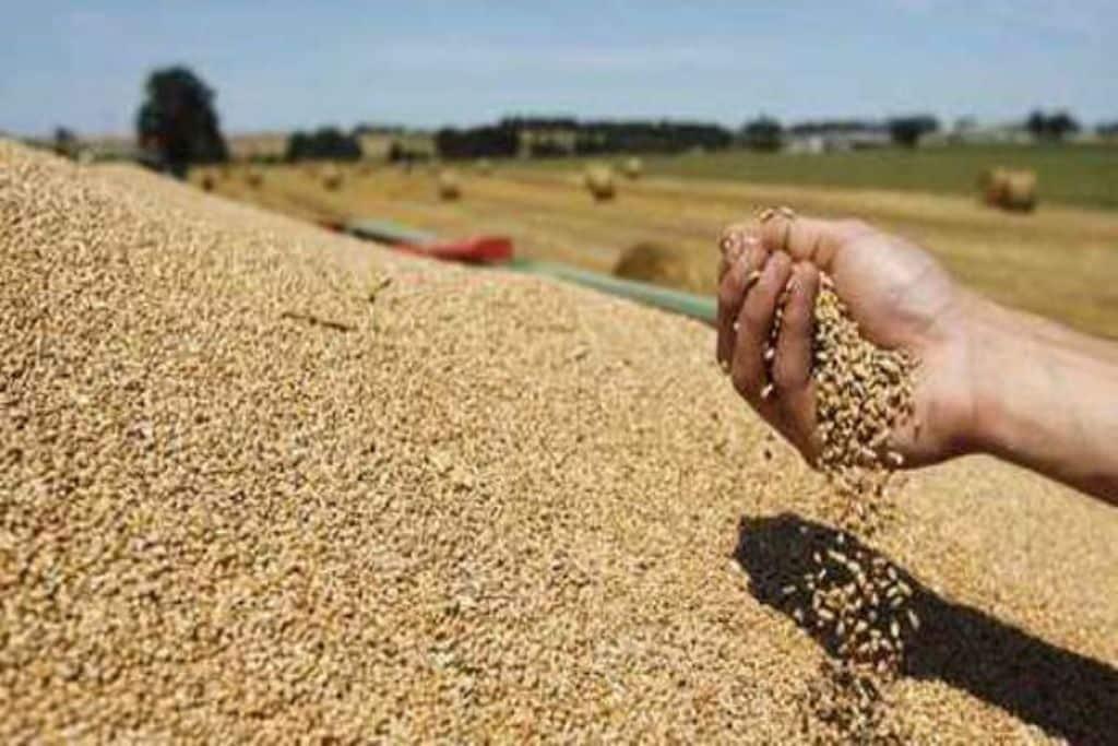 El CIC confirma que la cosecha mundial de trigo 2018/19 bajará por vez primera tras cinco campañas