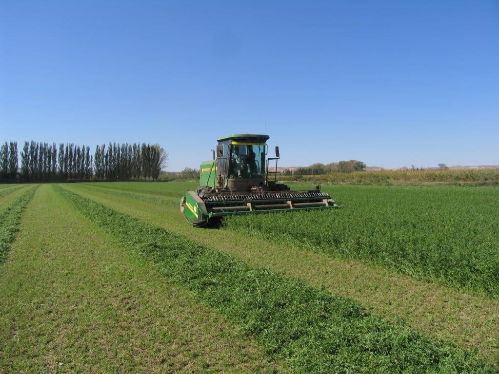 Cerca de 500.000 t de alfalfa deshidratada española exportadas en el primer semestre de 2018