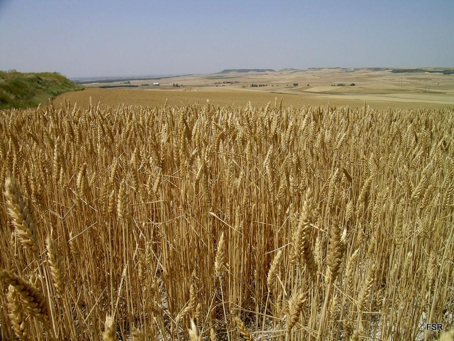 La Bolsa Internacional de Cereales del Duero congregará a más de 300 brokers y agentes comerciales