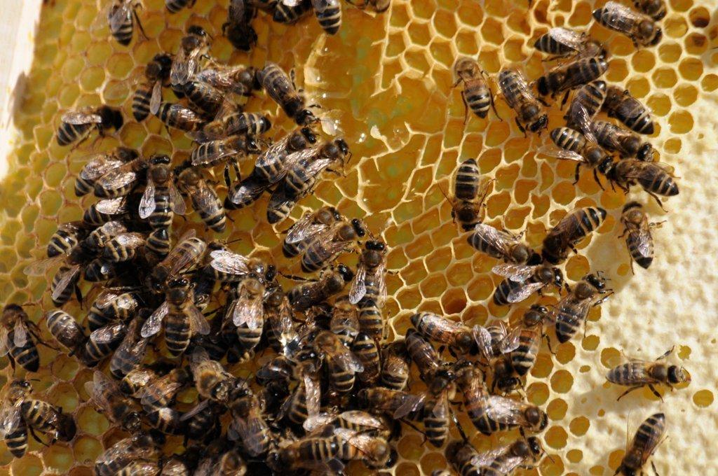 Aguilera reclama la indicación obligatoria del origen en el etiquetado de la miel en toda la UE