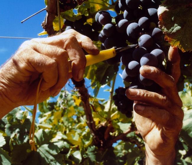 Mejoras en la contratación y plazos del pago en el sector vitivinícola