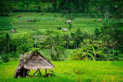 Los productores europeos de arroz piden poner fin a las importaciones sin aranceles desde Camboya y Myanmar
