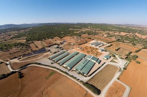 El sector porcino como motor de la economía de España