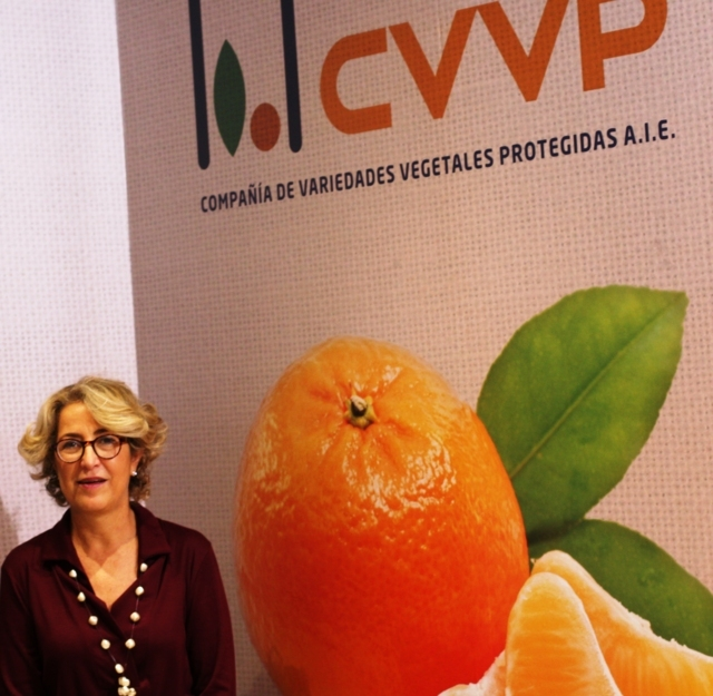 """Reyes Moratal (CVVP): """"La lucha contra el fraude ha sido uno de los pilares fundamentales de nuestra consolidación y crecimiento"""""""