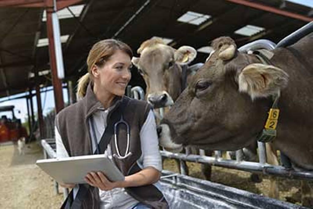 La UE da luz verde a las nuevas normas sobre medicamentos veterinarios y piensos medicamentosos