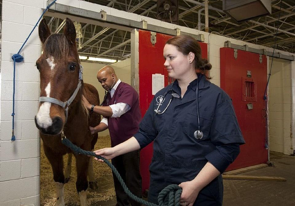 Dos de cada tres estudiantes de veterinaria, valoran trabajar en el extranjero
