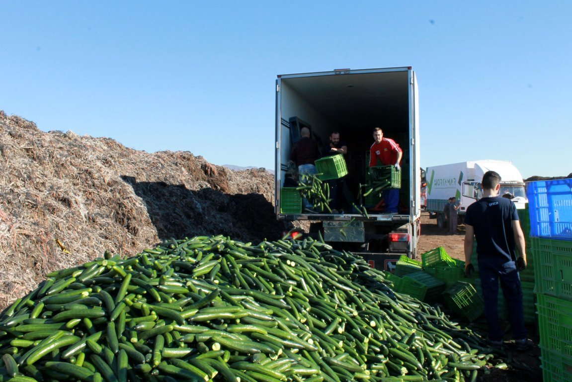 Comercializadoras retiran más de 100.000 kilos de pepinos del mercado por exceso de oferta