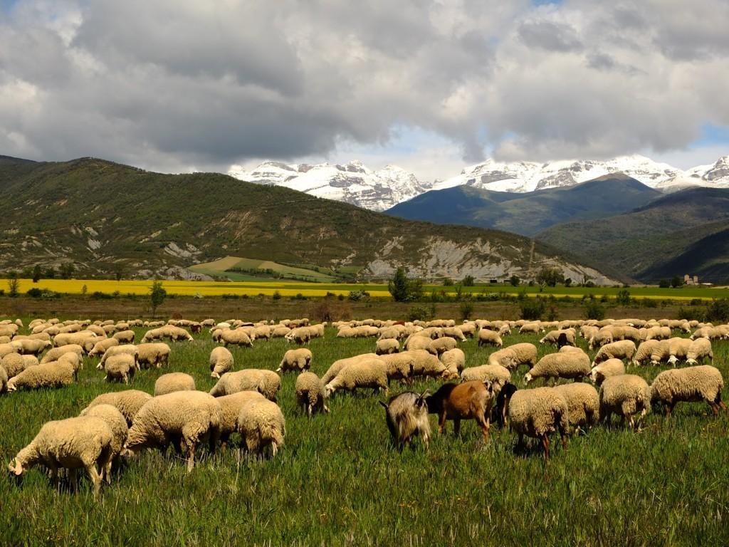 El CITA y la UZ diseñan un sistema de pagos por servicios ambientales para la agricultura y la ganadería mediterráneas