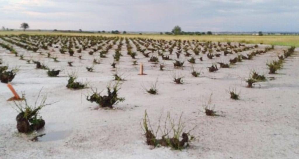 Hasta el 27-D para contratar los seguros de uva de vino y cultivos herbáceos extensivos