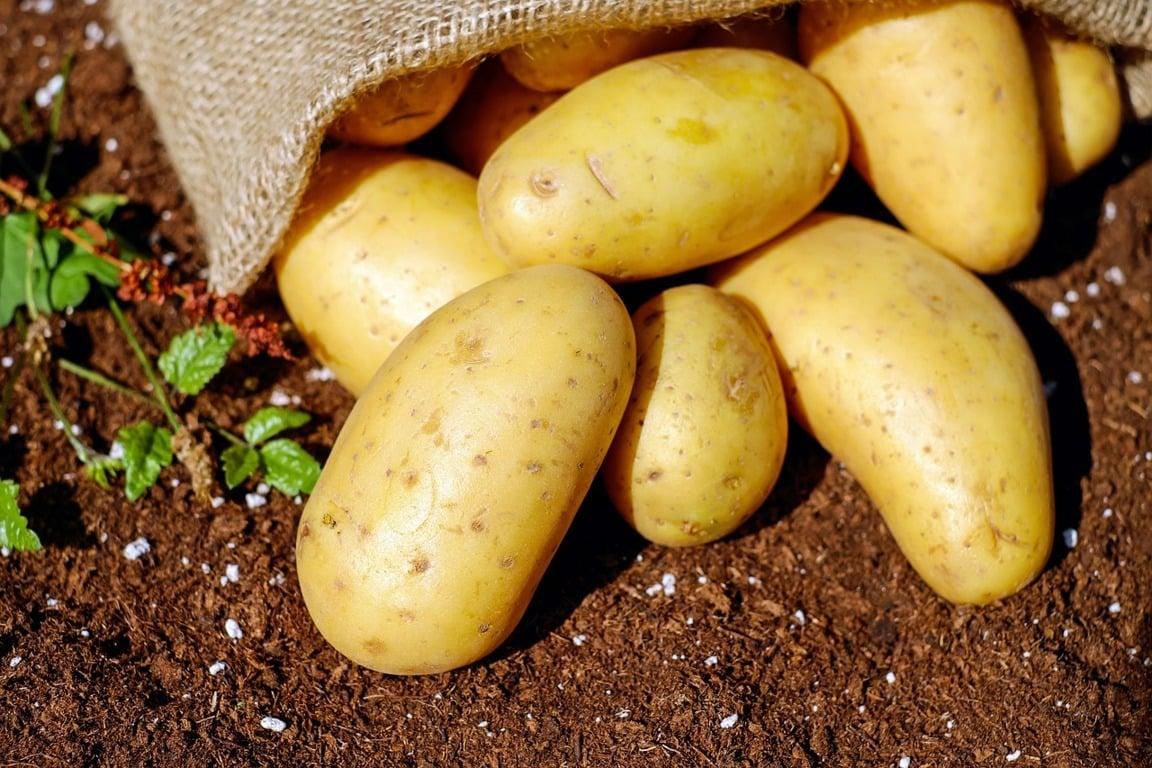 España cerrará la campaña de patata 2017/18 con un 15-20% menos de producción