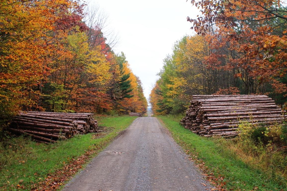 La madera aportó más de 100 millones de euros a la economía en 2018