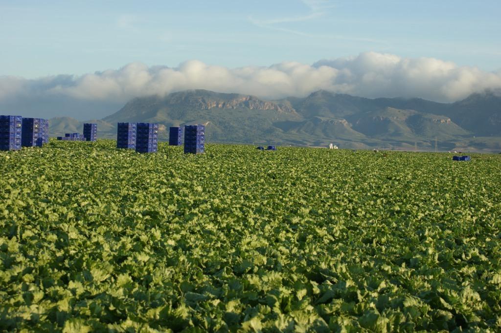 Diversificar más la exportación de frutas y hortalizas frescas fuera de Europa, prioridad para este 2019