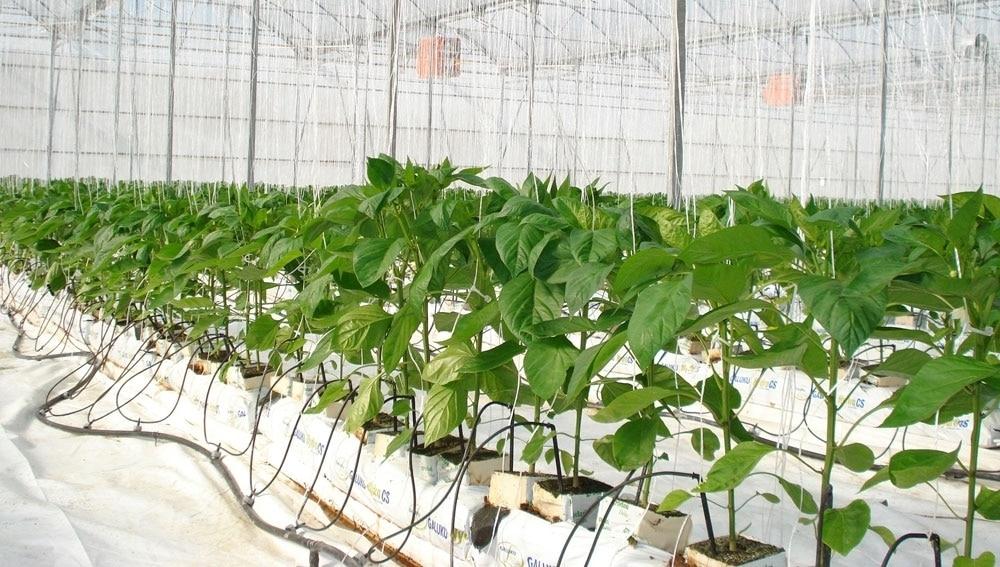 El BOE publica el primer Plan de Actuación de MAPA e INIA sobre los recursos fitogenéticos agrícolas y alimentarios