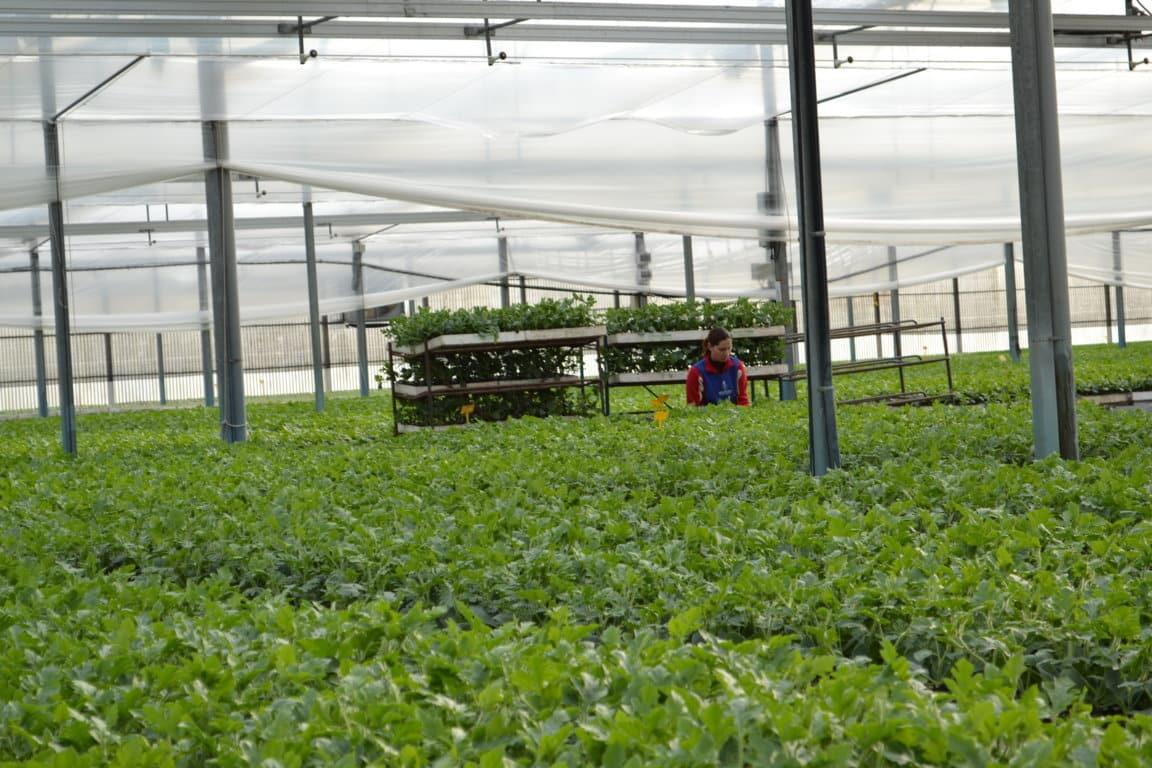 España solicita a la UE 290 M€ para financiar programas operativos de las OPs hortofrutícolas