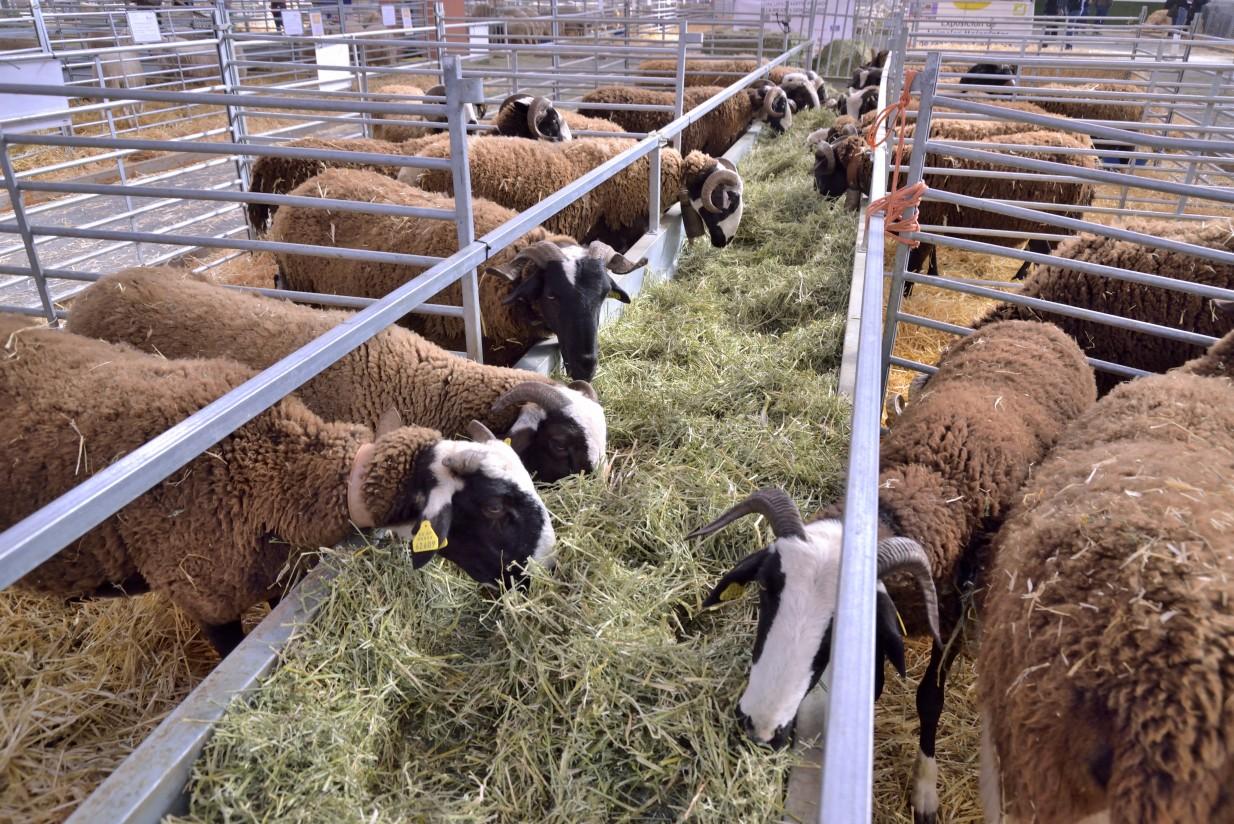 FIGAN 2019 presenta las ganaderías reconocidas con el Premio Excelencia