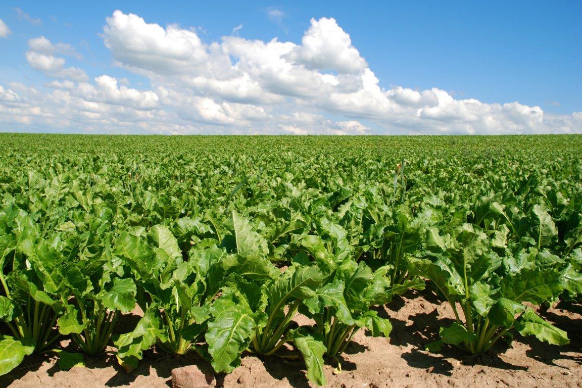 El Grupo de Alto Nivel sobre el Azúcar tendrá su informe de conclusiones en junio