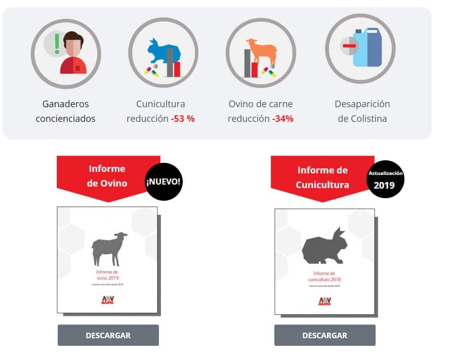 Nanta comparte los últimos resultados sobre el uso de antibióticos en ovino de cebo y conejos