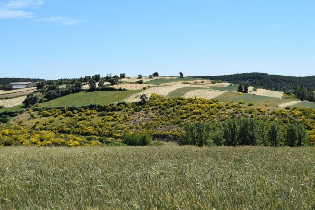 La Coalición Rural europea se opone al recorte de la financiación al Desarrollo Rural en la futura PAC