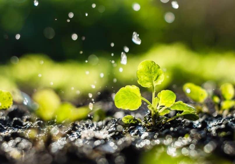Día Mundial del Agua: el regadío sostenible redujo un 15% el uso de agua por ha en diez años