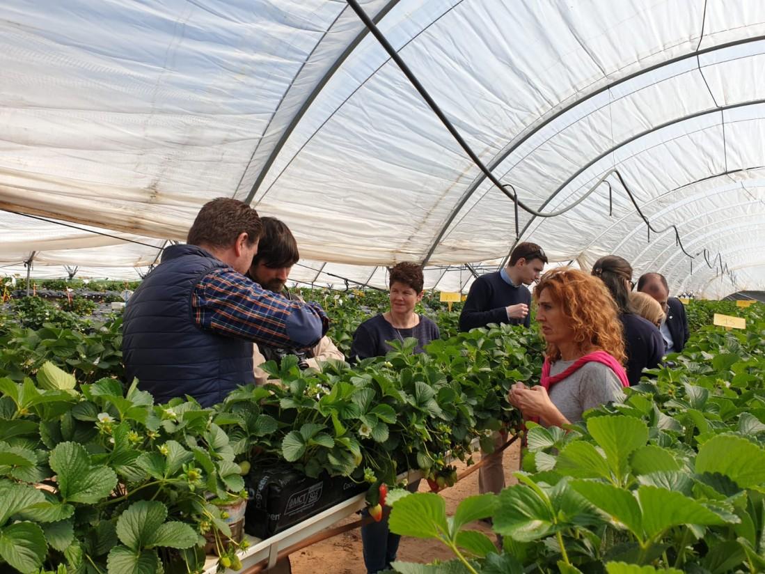 Proyecto Ferdoñana: ahorro del 28% del uso de agua a demanda en sustrato de cultivo hidropónico de fresa