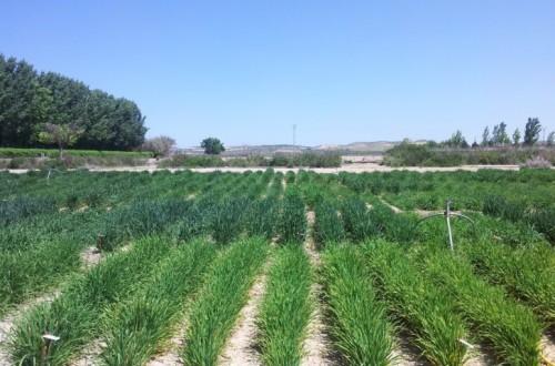 La semilla certificada, clave en la producción agraria