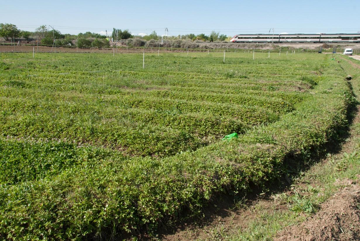 UPA denuncia que la Confederación del Tajo quiere cortar el riego de agricultores madrileños
