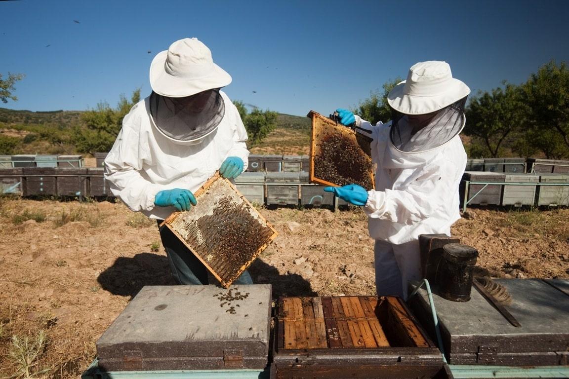 Descensos  generalizados de cotizaciones medias en los distintos tipos de mieles en la última campaña 2018/19