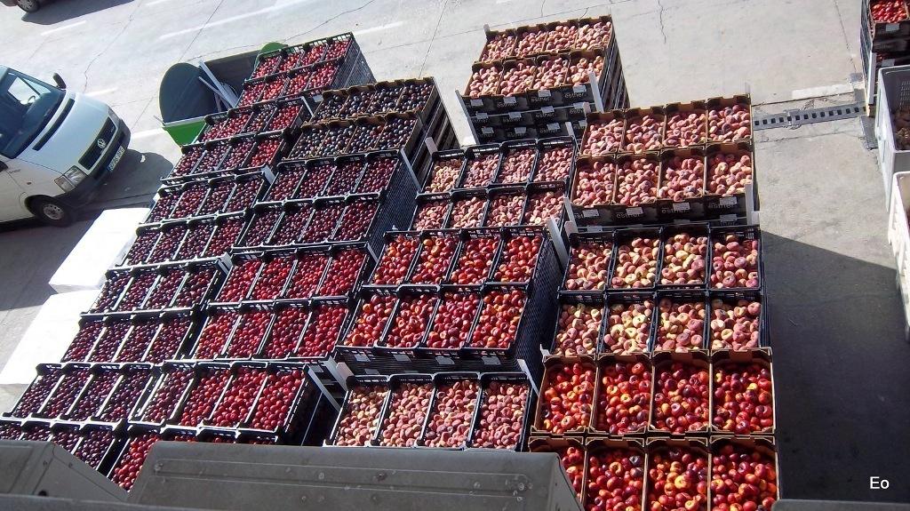 El MAPA acuerda retirar desde este 10-J unas 30.000 t de fruta de hueso en fresco para zumo