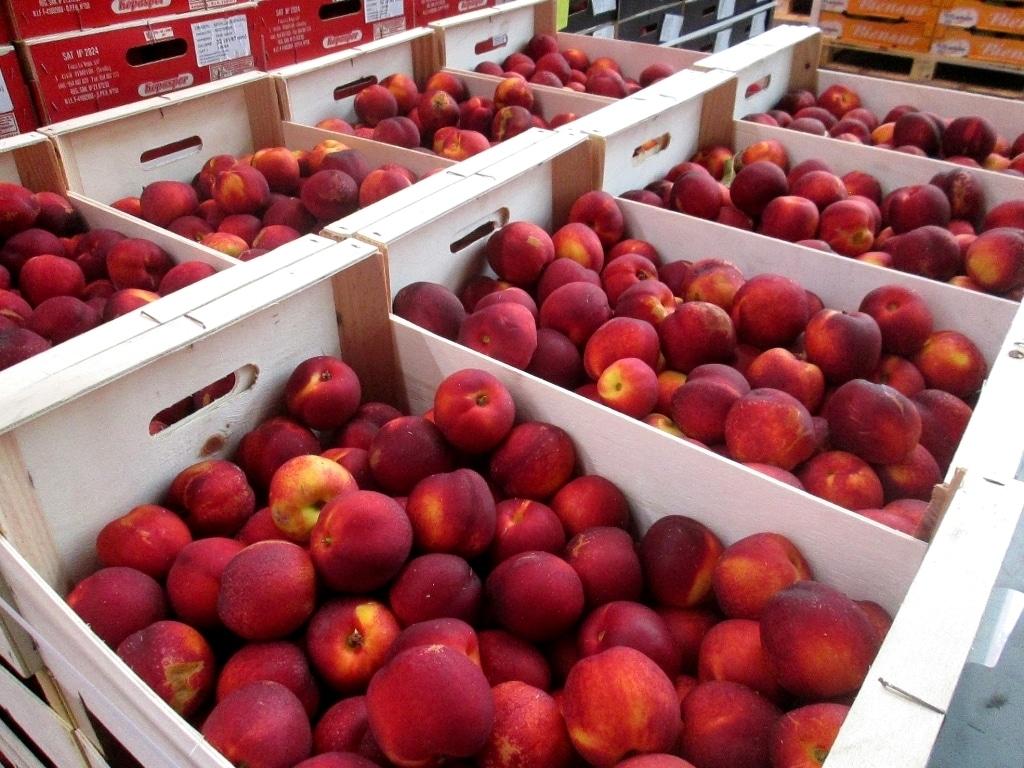 La cosecha de fruta de hueso 2019/20 vuelve a la normalidad, pero con bajos precios iniciales