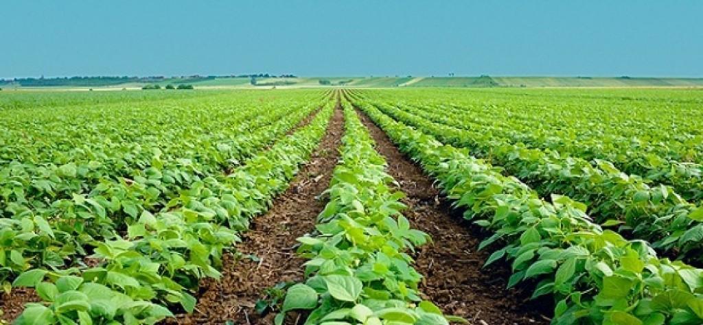Varias sectoriales de la UE constituyen ADAE para defender el modelo de agricultura europea frente a terceros países