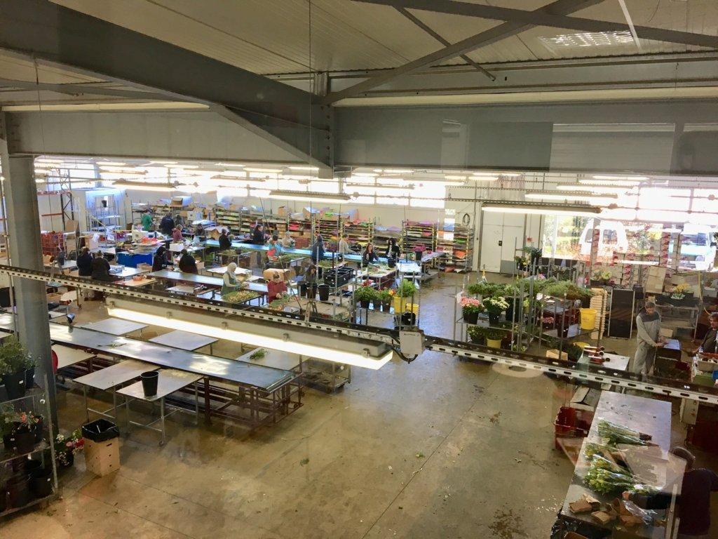 El Grupo Anecoop incorpora a Floren'Sud, empresa francesa especializada en floricultura
