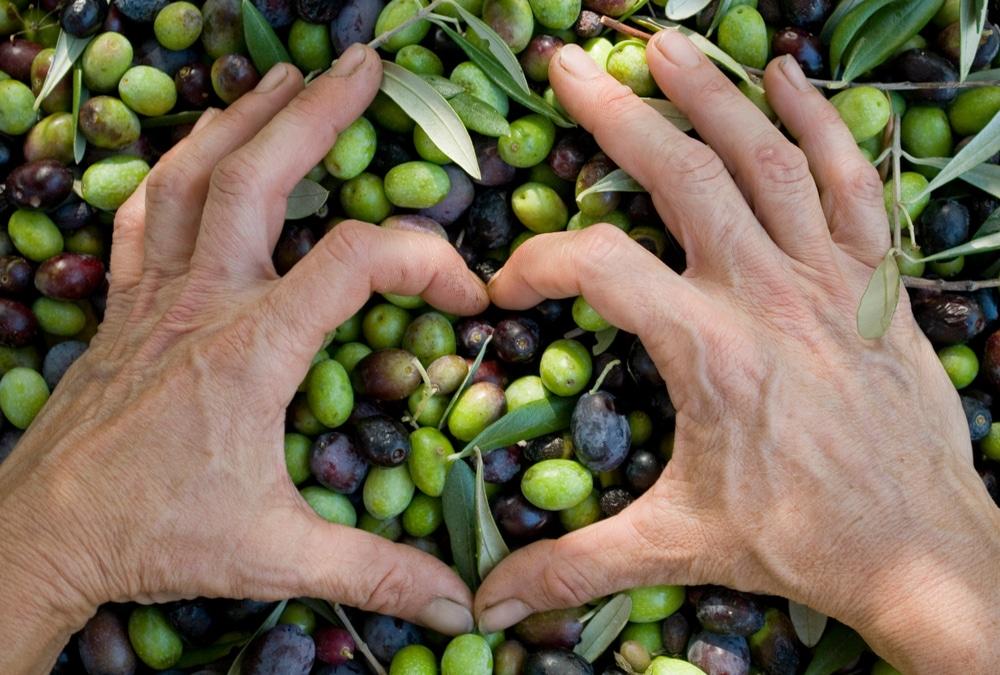 El grupo Deoleo promueve la Asociación PROValor para fomentar la calidad, rentabilidad y sostenibilidad del aceite de oliva