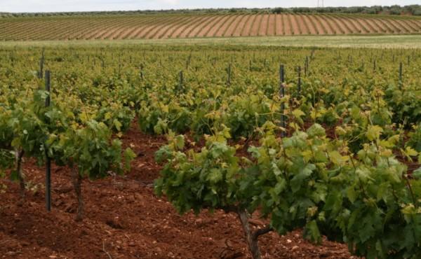 Optimización de la fertilización del viñedo