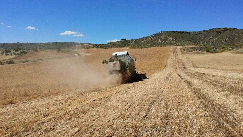 La Asociación del Comercio de Cereales prevé un 30,2% menos de grano de otoño-invierno en 2019/20