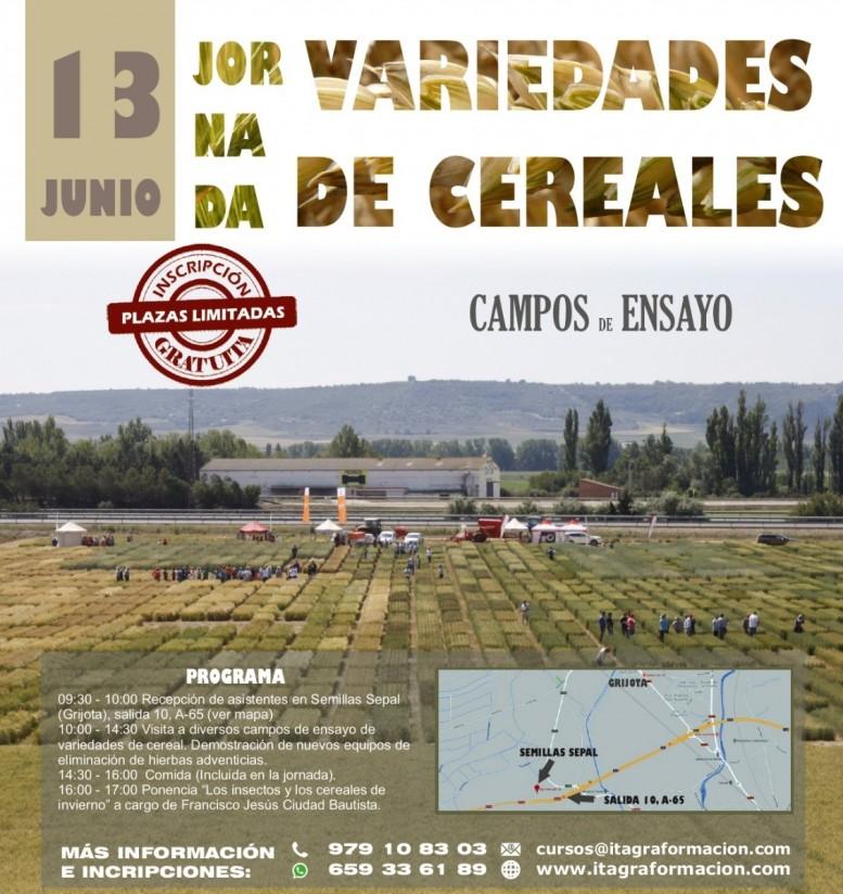 Jornada del Itagra.ct sobre variedades de cereales en campos de ensayo