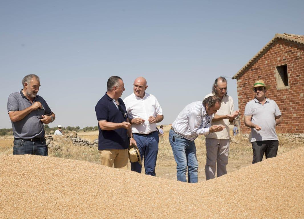 La cosecha de cereal de invierno en Castilla y León se reduce hasta solo 4,8 Mt por la sequía en 2019/20