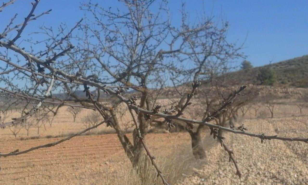 Cooperativas reclama también al MAPA recuperar la ayuda nacional a la superficie de frutos secos