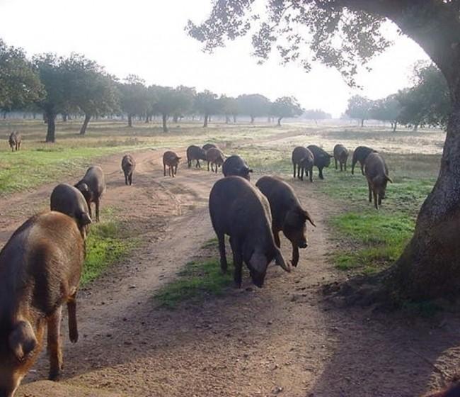 Covid-19: Castilla y León recibe 769 peticiones de ayuda de ganaderos